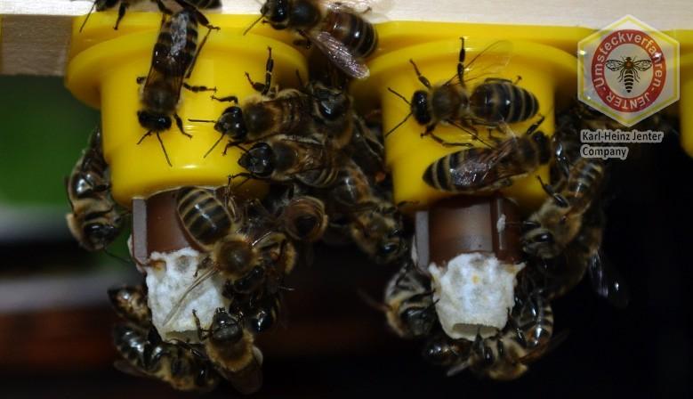 "Сот Джентера - магазин пчеловодства ""БиБест"""